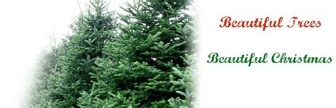 real xmas trees for sale newcastle real trees for sale tree dublin