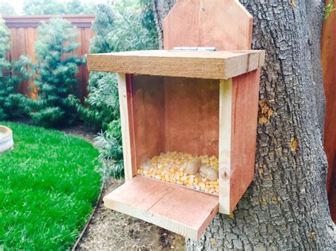 dare dorm bed buddies squirrel feeders for the backyard 28 images squirrel