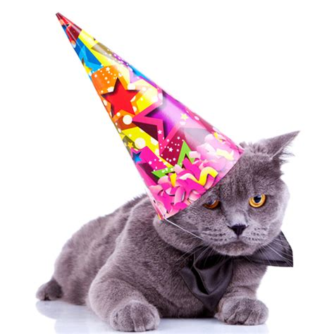 cat birthday how to throw a birthday for your cat catster