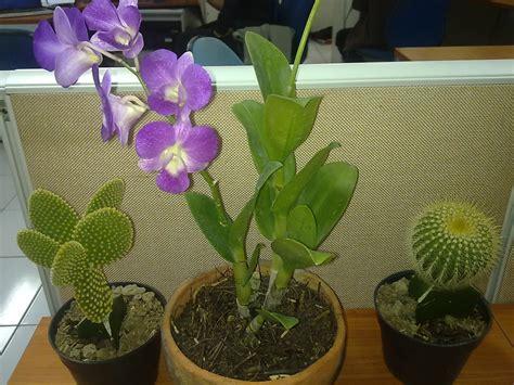 tanaman hias  cantik  meja kantor loverlem blog