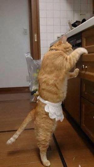 funny cat wearing  apron luvbat