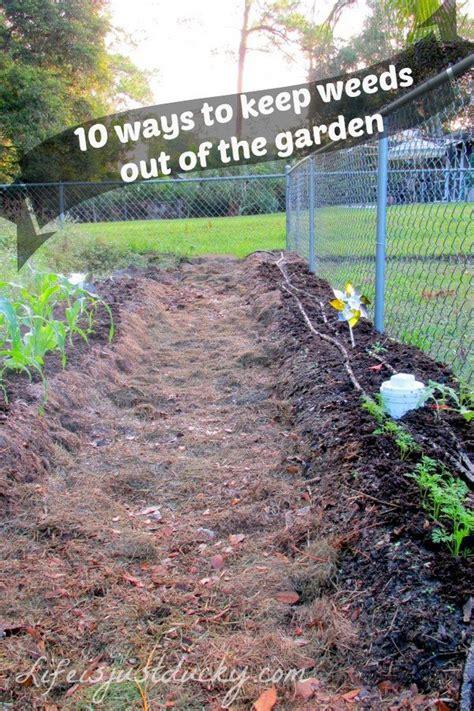 garden decoration hacks 35 creative garden hacks and tips 5 diy home