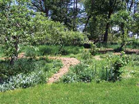 Edible Forest Gardens by Plant An Edible Forest Garden Organic Gardening Earth News