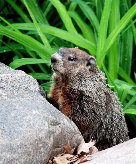 predictions of a quot groundhog day quot of garden