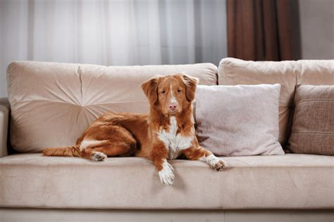 best couch for dog owners best furniture fabric for pet owners today movers
