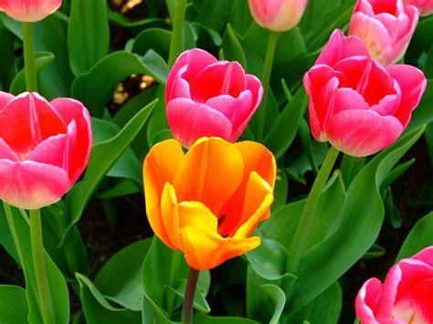 sfondi giardini fioriti giardini fioriti crea giardino realizzare un giardino
