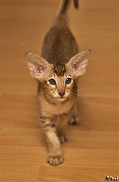 ears and kittens on