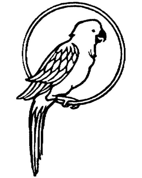 coloring image parrot parrot coloring pages the beautiful bird gianfreda net