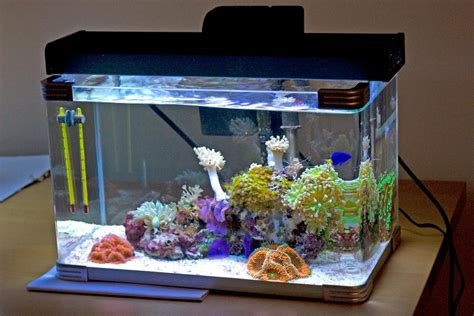 saltwater aquarium setup www pixshark com images