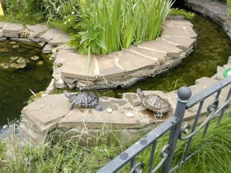 turtle ponds for backyard feng shui home with pets step 1