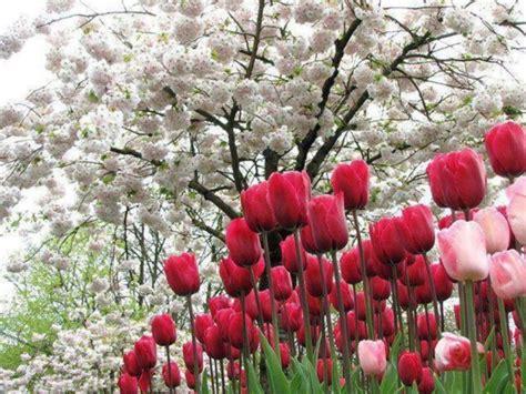 imagenes de flores naturales bonitas espectaculares paisajes con flores de colores muy bonitas
