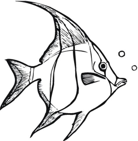 free coloring pages of tropical fish pics for gt realistic tropical fish coloring pages