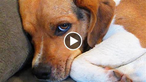 Low Cost House by Ecco Come Chiedono Scusa I Cani Adorabili