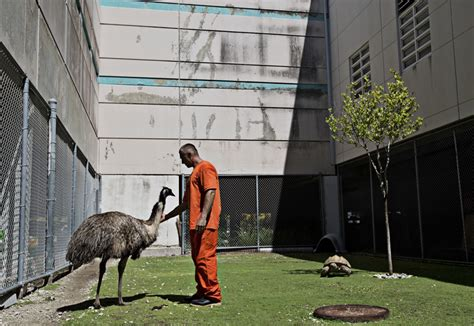 Office Zoo In Photos The Florida That Doubles As An