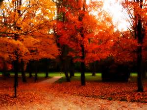 Beautiful fall trees take in the beauty of fall