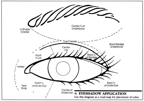 eyeshadow diagram how to put on eyeshadow diagram