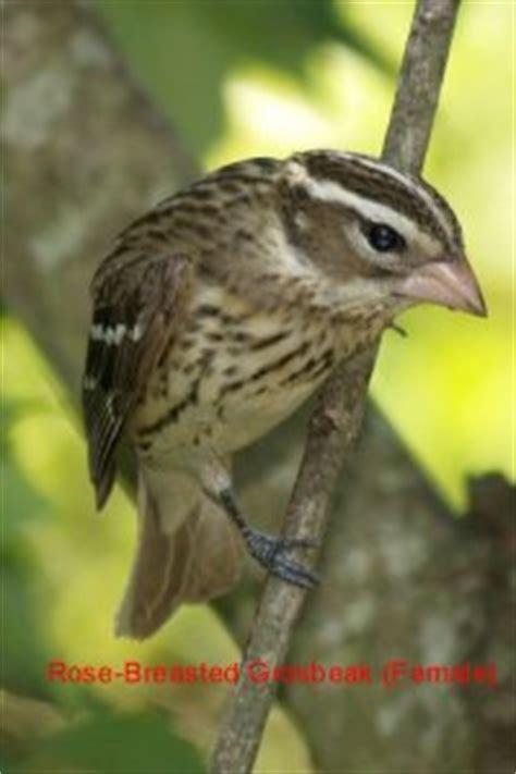 fayetteville north carolina bird pictures backyard