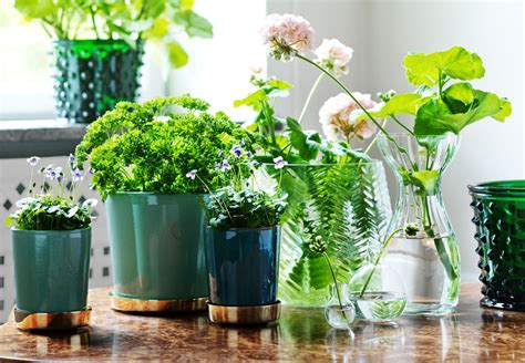 aromatiche in vaso piante aromatiche in vaso per la cucina living corriere