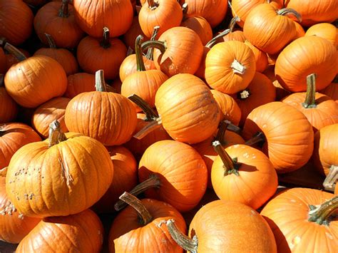 My Favorite Fall Things and the First Day of Autumn