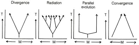 Pattern Component Theory Of Evolution | figures htm