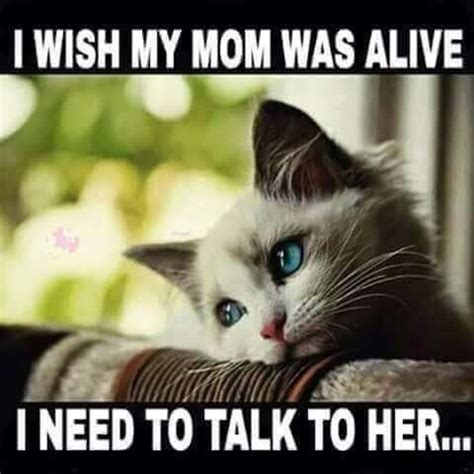 mom  alive    talk   pictures