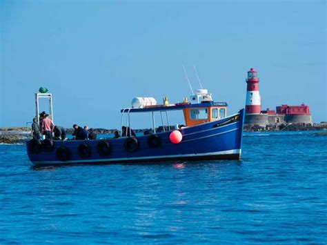 farne islands boat trips prices farne islands freediving trip with go freediving