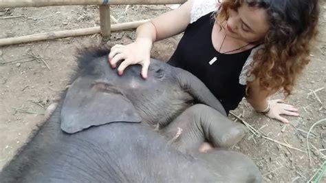 baby kommt nicht in den schlaf so will doch jeder einschlafen babyelefant wird in den