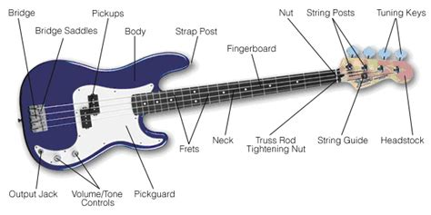 buying guide how to choose a bass guitar the hub