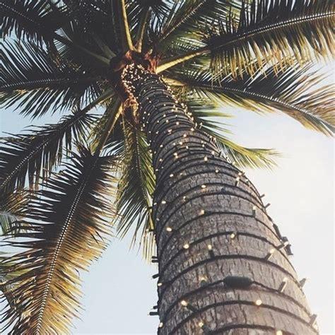 lights on palm tree light lights palm palm tree palms sommer