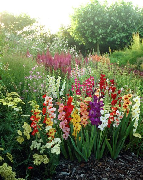 gladioli gladiolus sword lily plants flowers 99roots com gardening ideas pinterest