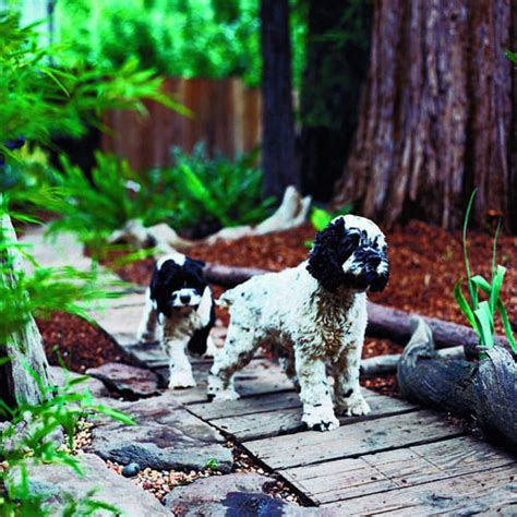 Garden Ideas For Dogs How To Create A Friendly Yard Kg Landscape Management