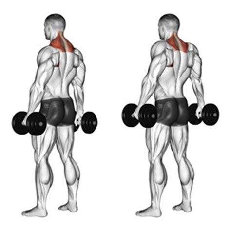 esercizi di base o fondamentali per aumentare la massa
