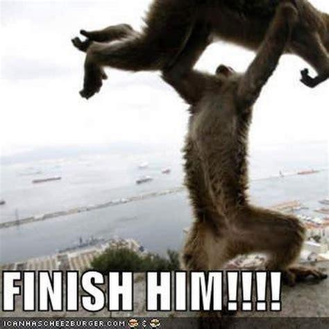 Baboon Meme - funny cat memes cat memes