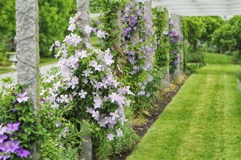 Plantes Grimpantes Pour Pergola by Plantes Grimpantes Pour Pergola 20 Id 233 Es Romantiques