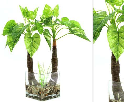 pflanzen kaufen photos pflanze im glas mit 26 bl 228 tter h 246 he 50cm