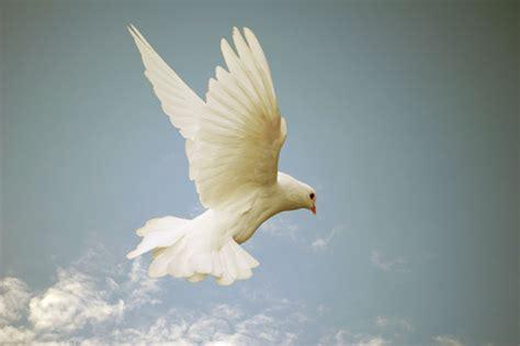 spirito consolatore chi 232 lo spirito santo