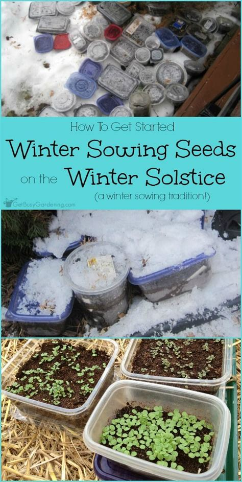 17 best images about winter sowing seeds on pinterest the winter perennials and fruit plants