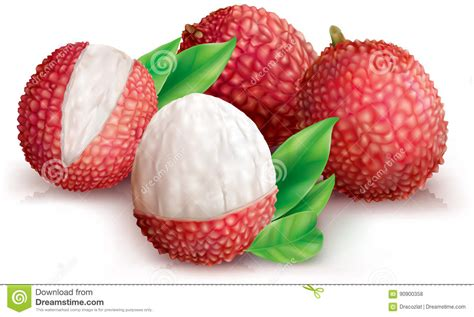 lychee fruit peeled lychees and peeled lychee stock vector image of