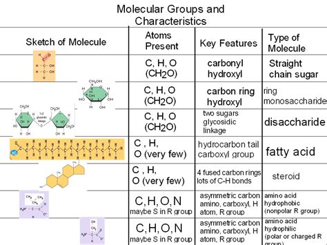 chapter 6 carbohydrates study guide answers free worksheets 187 carbohydrates worksheet answers free