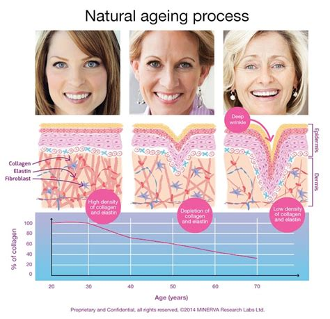 7 Ways To Skin Ageing by Why Our Skin Wrinkles With Age And How To This