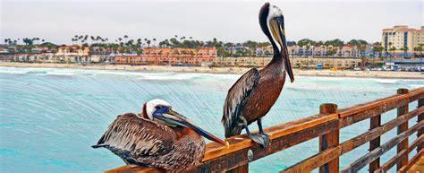 Seo Company In California by Oceanside Seo Blue Media Expanded Sem Seo To The Coast