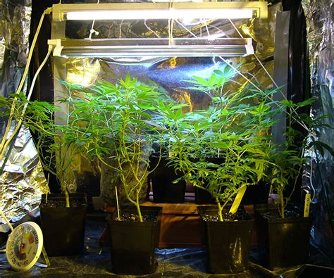 Grow Room Watering System learn the secrets of marijuana grow rooms today