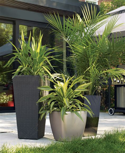 Tropical Planter Ideas by Tropical Accent Container Gardening