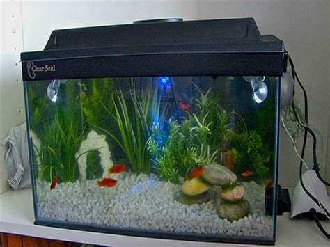 small fish tank decoration ideas fish tank decoration ideas for charming and refreshing look oscar fish tank decorations