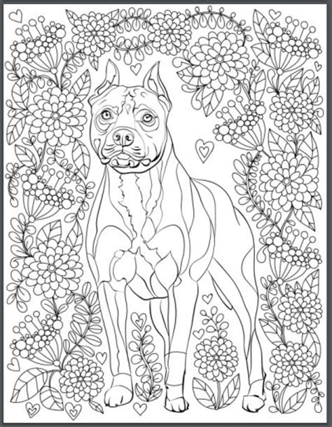 koala adults coloring book stress relief coloring book for grown ups books 158 best images about color pages on dovers