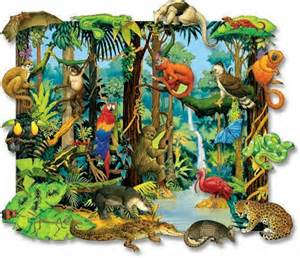 Plants That Live In The Tropical Rainforest Biome - rainforests and savannas david bird science