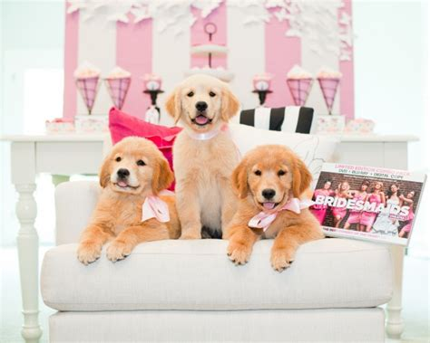 bridesmaids puppies bridal shower themes bridesmaids the philly in
