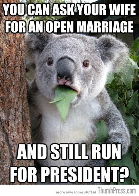 Koala Bear Meme - best of surprised koala bear meme 25 pics memes
