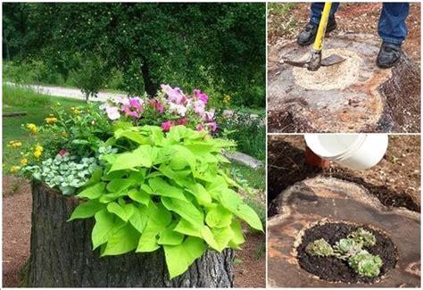 absolutely wonderful tree stump landscaping  decor ideas