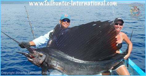 sailfish boats south africa september 2013 tailhunter fish report